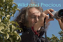 go to Wild and Precious website